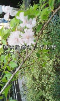sukiyabashi.jpg